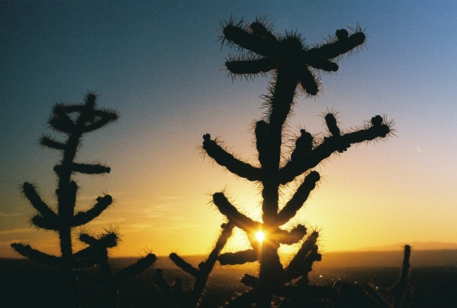 Cholla in the Sandia foothills at sunset. (Photo: Natalie Rae Good)