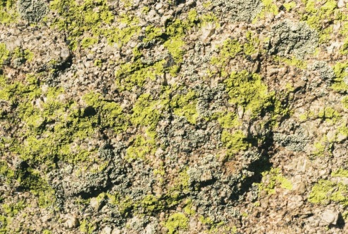 Lichen covers granite in the Sandia foothills. (Photo: Natalie Rae Good)