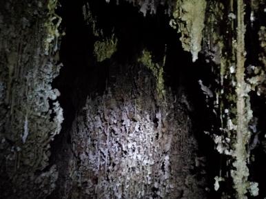 Massive, helictite-encrusted speleogens in Pink Panther Cave's Speleogasm Chamber. (Photo: Mag Kim)