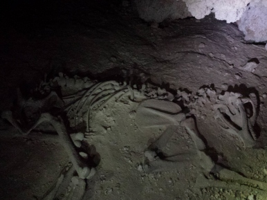 The skeleton of a bear in Pink Panther Cave. (Photo: Mag Kim)