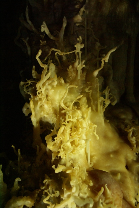 Helictites in Virgin Cave. (Photo: Mag Kim)