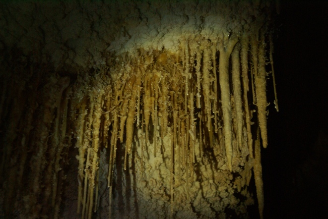 A carillon of textured stalactites in Virgin Cave. (Photo: Mag Kim)
