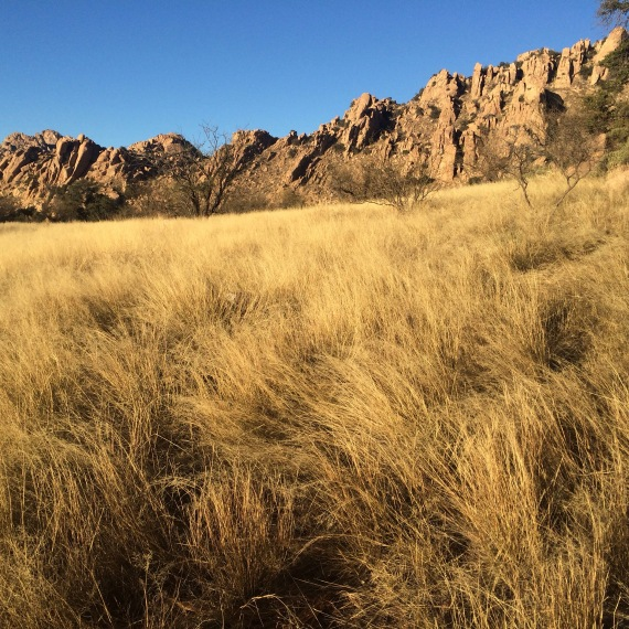 Tawny grasses in Cochise Stronghold, Arizona. (Photo: Natalie Rae Good)